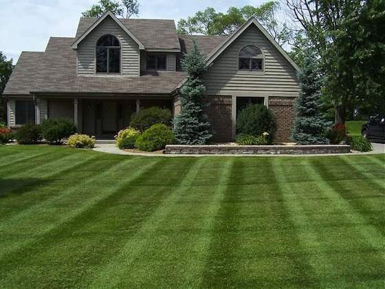5 Ways to a Greener Lawn