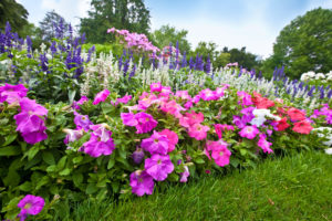 Fast Growing Flowers to Put in Your Garden