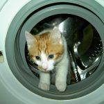 cat in the washer