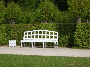 create privacy with beautiful hedges