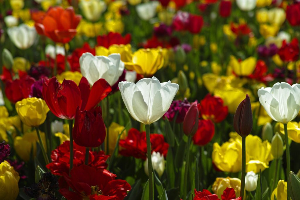 Blooming Gardens 4 Of The Best Flowers To Plant This Spring