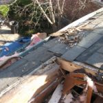 Roof Rot: How to Fix Your Moldy Home's Fungi Problem