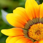 6 Tips on How to Make Your Garden Stand Out