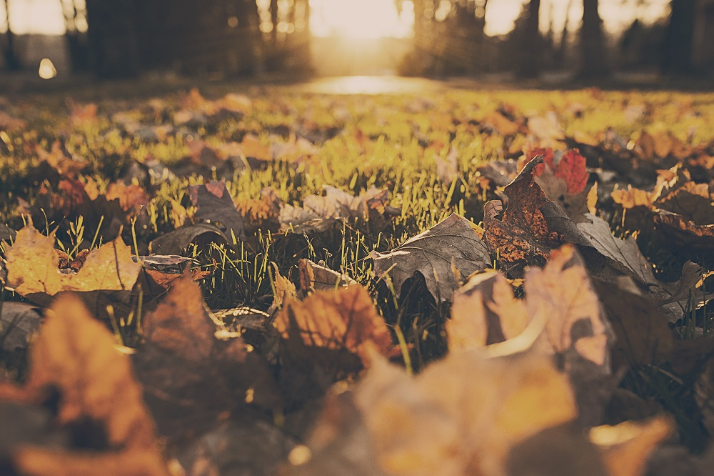 Is Your Home Ready for Fall 4 Things You Must Do Before the Season Changes