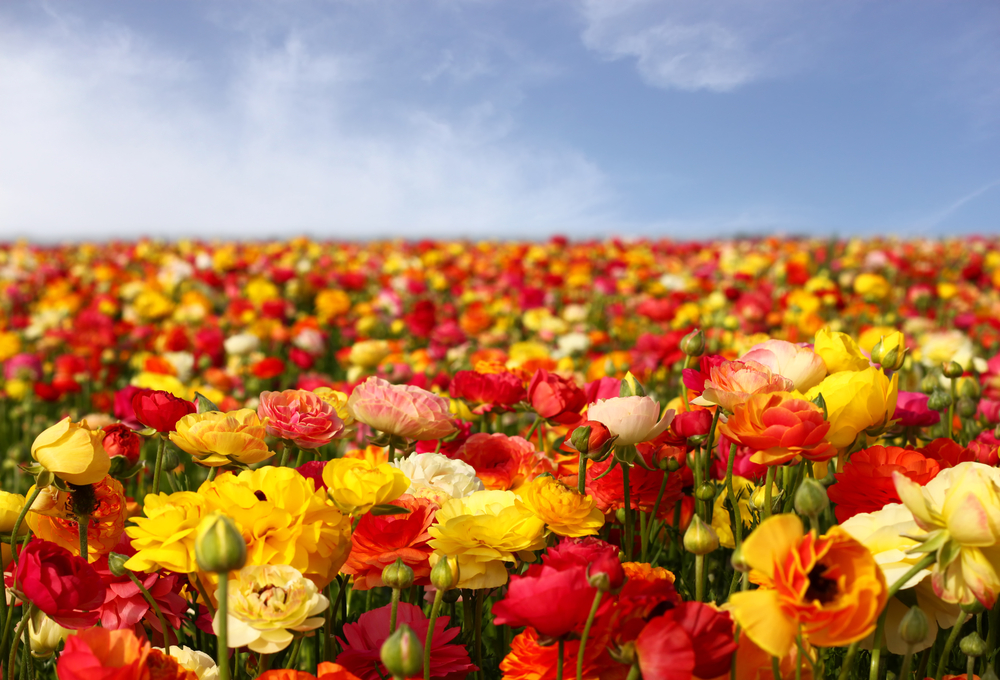 ... Fast Growing Flowers To Put In Your Garden