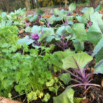 6 Tips To A Successful Raised Bed Garden