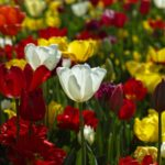 Blooming Gardens: 4 Of The Best Flowers To Plant This Spring